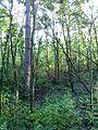 """Парк шума """"Гази Баба"""" 59.jpg"""