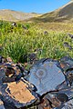 Петроглифы - panoramio.jpg