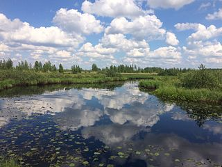 Loknyansky District District in Pskov Oblast, Russia