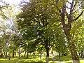 Прилуцький дендропарк Прилуцький район, м. Прилуки, вул. Вавилова, 16 74-107-500 02.jpg