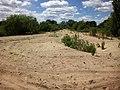 Пісок - panoramio (1).jpg