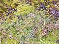 Тарханкутская степь зимой - panoramio.jpg