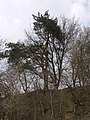 Украина, Киев - Голосеевский лес 42.jpg