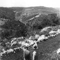יערות הכרמל צילם טים גידל 1937 (בתוך אלבום יערות הכרמל - נהריה)-PHAL-1620412.png
