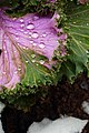 تصاویر گلها و گیاهان- بوستان بنیادی قم.jpg