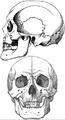 カルムイク人の頭骨.png