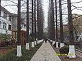 冬日的林荫道 - panoramio.jpg