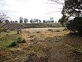 台場公園 - panoramio (20).jpg