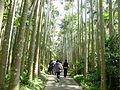 東南植物楽園-ヤシの木路.JPG