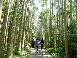 Okinawa, Okinawa - Path of Palm Trees, Southeast Botanical Gardens