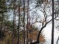 枫林古道上 - panoramio.jpg