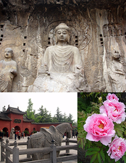 Top:Longmen Grottoes, Bottom of left:White Horse Temple, Bottom of right:Paeonia suffruticoca in Luoyang