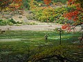 芦苇海 - Reed Lake - 2011.10 - panoramio (1).jpg