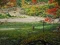 芦苇海 - Reed Lake - 2011.10 - panoramio (1).jpg