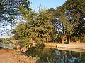 02834jfSunsets Irrigation Bridge Pulilan Plaridel National Road Parulan Fieldsfvf 07.jpg