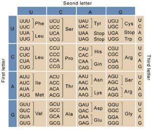 Nirenberg and Leder experiment -  Genetic Code Chart