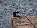 07159 Sant Elm, Illes Balears, Spain - panoramio (38).jpg