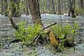 15-05-09-Biosphärenreservat-Schorfheide-Chorin-RalfR-DSCF5493.jpg