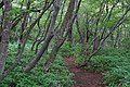 180727 Nasu Heisei-no-mori Forest Nasu Japan13.JPG