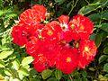 2008 07 Botanical Garden Meran 70420R0162.jpg
