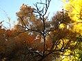 2011-10-31-155143 .JPG - panoramio.jpg