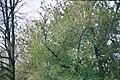 20140409 Dresden Dobritz Prohliser Landgraben 033 31.jpg