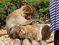2016-04-21 14-16-13 montagne-des-singes.jpg