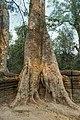 2016 Angkor, Ta Prohm (16).jpg