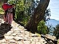 20170811 Bolivia 1713 Yumani sRGB (37949606612).jpg