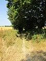 2018-07-23 Paston way, Foxhills woods, Northrepps, Norfolk (10).JPG