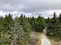 2019-10-27 11 56 51 View north across a Red Spruce forest from the observation tower on Spruce Knob in Pendleton County, West Virginia.jpg