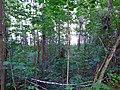 2415. Sarzhenskoe Lake.jpg