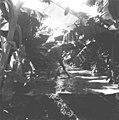 25 שנה לדגניה ב, מטע הבננות-ZKlugerPhotos-00132q0-090717068513849f.jpg