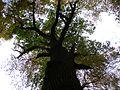 2 standing up tree.jpg