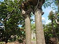 3428Poblacion, Baliuag, Bulacan 48.jpg