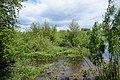 61-246-5017, Скориківське болото.jpg