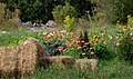A country garden in autumn - Flickr - marneejill.jpg
