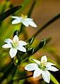 A garden near Scarborough-6 (4629689706).jpg