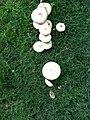 A mushroom family - panoramio.jpg