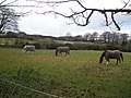A small herd of animals, near Natsworthy - geograph.org.uk - 1047277.jpg
