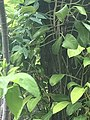 A squirrel hidden within the leaves.jpg