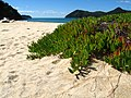 Abel Tasman National Park beach plant.jpg