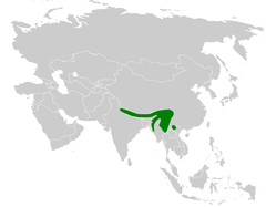 Abroscopus schisticeps distribution map.png