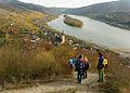 Abstieg des Rheinsteig nach Lorch am Rhein.jpg