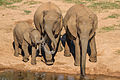 Addo Elephants-001 (b).jpg