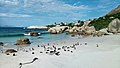 African penguins (Spheniscus demersus) at Boulders Beach (05).jpg