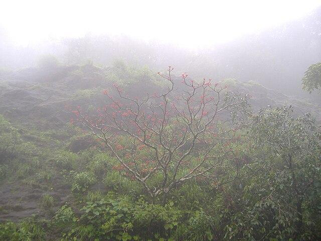 Misty Agumbe