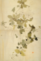 Aimitsu-1941-Akebi.png
