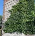 Alcalá de Henares (Madrid) Recinto amurallado, torre 12 (RPS 15-07-2012) (cropped).png