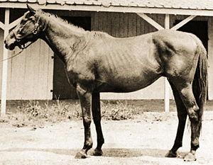 Alcibiades (horse) - Image: Alcibiades (USA)